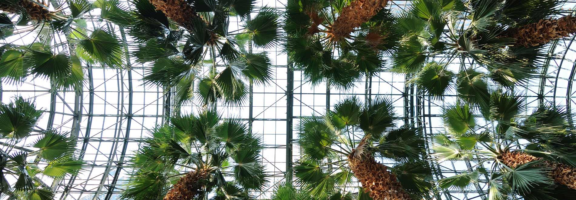 atrium-plants