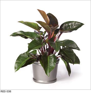 small medium plant