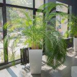 plants 5
